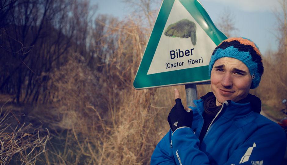DER BEWEIS! :) Im Jahre 2008 wurde der Biber-Bestand in Österreich auf etwa 3000 geschätzt. Vorkommen an der Donau besonders an Staustufen, grenzübergreifend auch in Bayern und Slowenien. (Danke David für die Info)