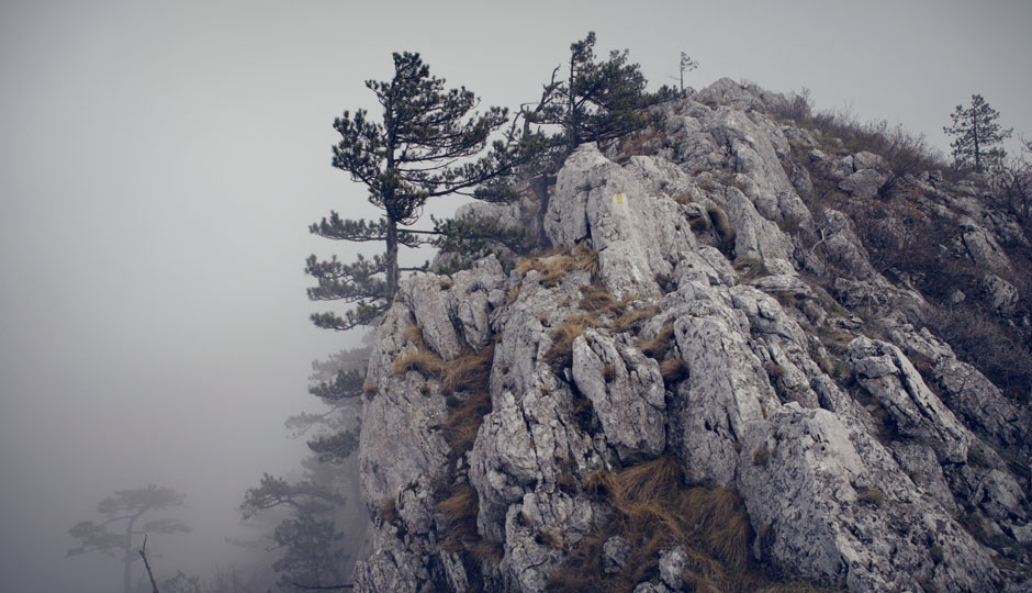 Je näher wir dem Gipfel des Domogled kommen, desto felsiger wird die Landschaft