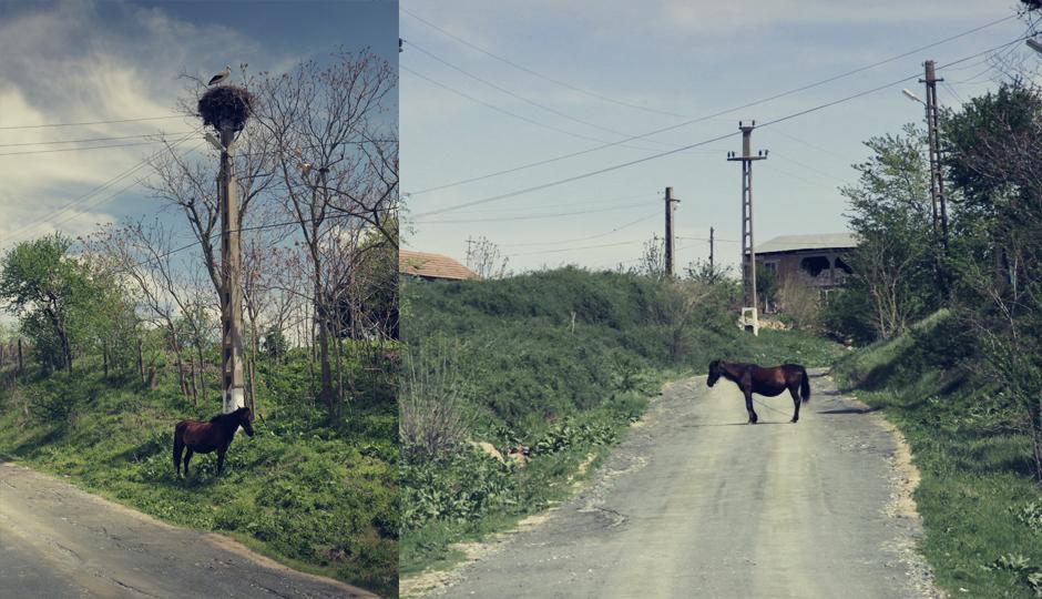 Steht ein Pferd auf der Strasse...