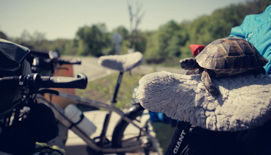Ob man mit unseren bepackten Rädern wirklich schneller voran kommt als im Schildkrötentempo?