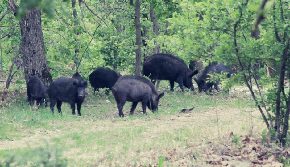 Uns läuft eine Horde Wildschweine über den Weg. Sichtlich unbeeindruckt von uns und unseren Rädern wühlen sie sich ungestört weiter durch das Laub.