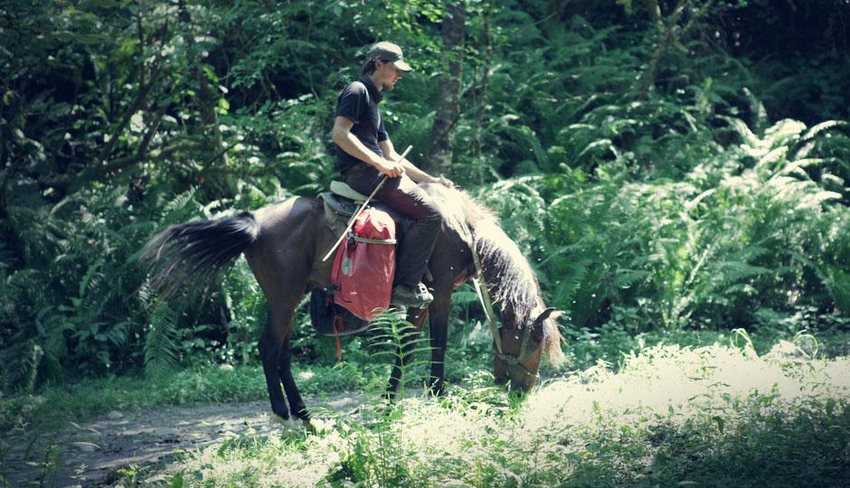 Riesige Bremsen attakieren uns und unsere Pferde