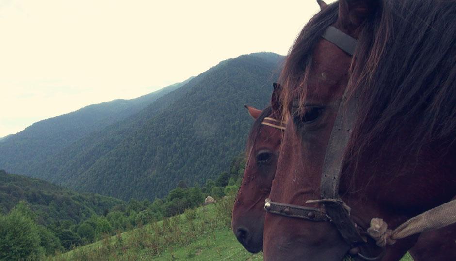 Nicht nur unsere Pferd sind müde...