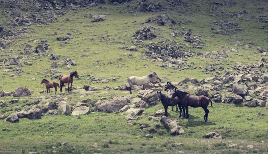Die Pferde halten sich lieber am Wegesrand auf...