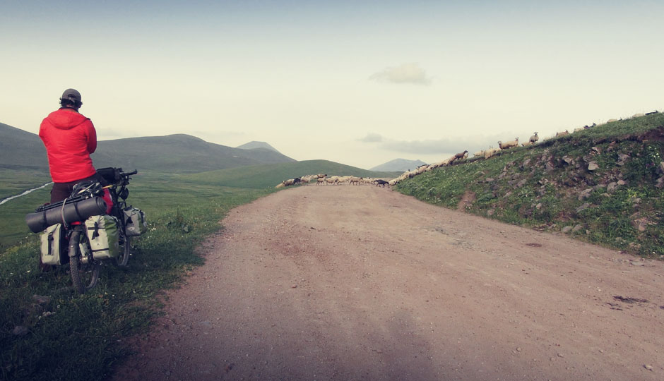 Einzig Schafe kreuzen unseren Weg...