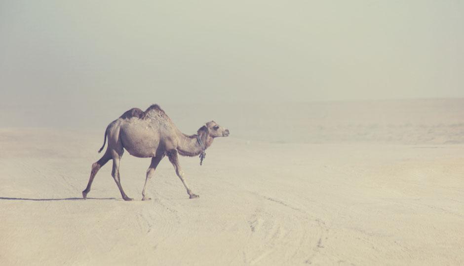 Die Hitze ist unerträglich, jetzt sehen wir schon Kamele!