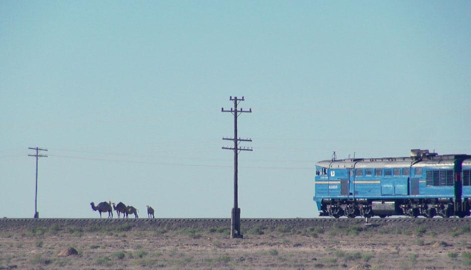 Kamele haben hier Vorfahrt! Der Zug wartet bis auch das Letzte die Gleise überquert hat...