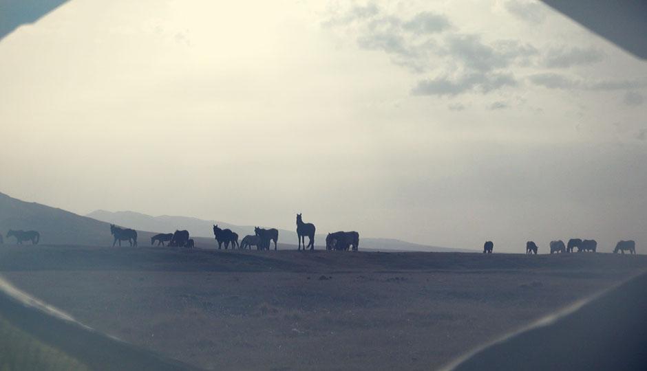 Am Morgen nähern sich ein paar Pferde unserem Zelt. Der Anführer begutachtet es sehr skeptisch...