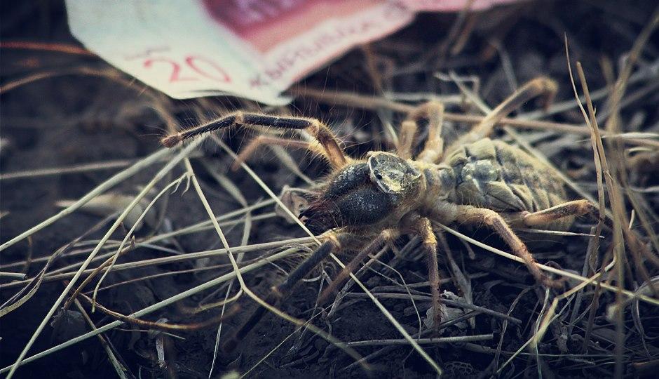 Auf diese riesige Spinne haben wir aus Versehen unser Zelt gestellt. Etwas erleichtert sind wir allerdings, dass zumindest dieses Exemplar uns nicht mehr gefährlich werden kann.